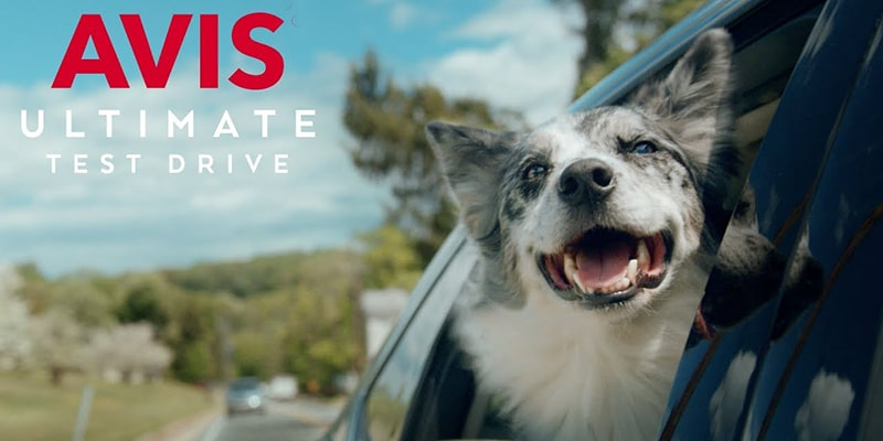 Test Drive With Dog